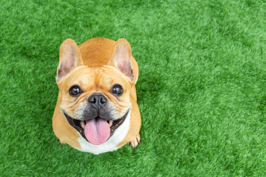 Visit dog friendly craft breweries in the Berkshires